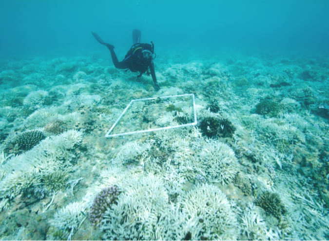 Marine Biologist Surveys Bleached Reef 638631722 6000×4000